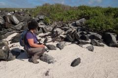 2013 - Entre iguanes