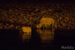 Rinoceronts bebent a la nit