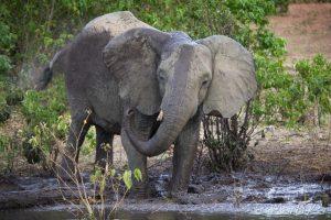 Elefante en el Okavango